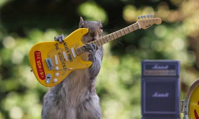 性松鼠,蛋白质,音乐会,吉他