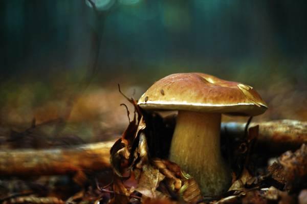 秋天,蘑菇,性质