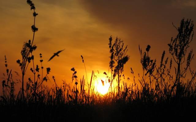 太阳,乌克兰,草原,鸟,日落