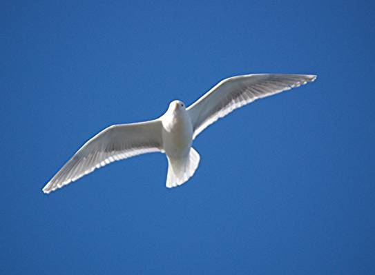 白色的鸟在天空中飞翔高清壁纸