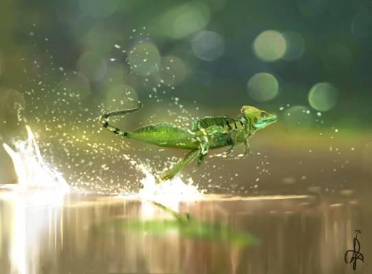鲜花,美容,飞行,艺术,壁纸,喷,艺术,水,帕尔马,速度,自然,艺术,爬行动物,运行,蜥蜴,...