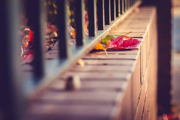 宏观,围栏,棒,自然,秋天,围栏,叶子