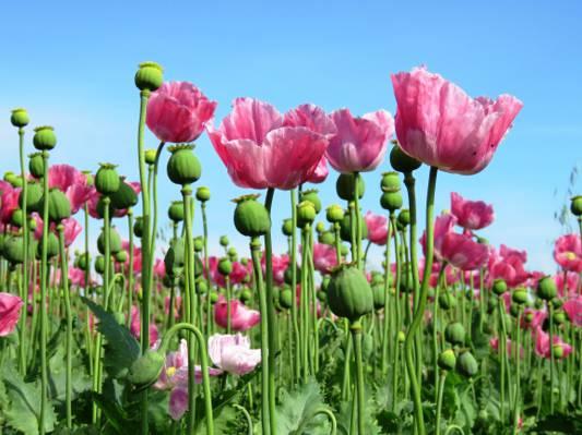 粉红色的花朵照片的高清壁纸