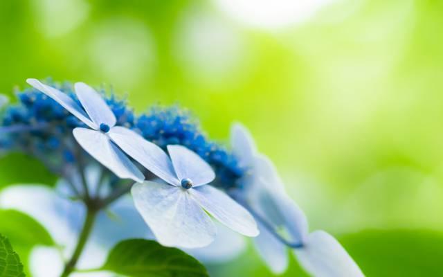 鲜花,宽屏,模糊,高清壁纸,壁纸,绿色,领域,全屏幕,背景,宽屏,背景,大自然,...