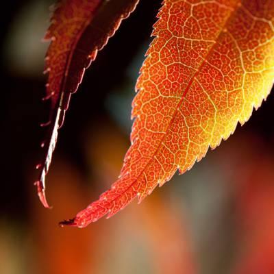 特写镜头摄影的绿色叶子植物HD墙纸