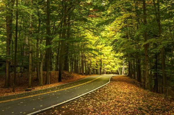 森林,秋天,纽约州,州立公园莱奇沃思,莱奇沃思州立公园,州...