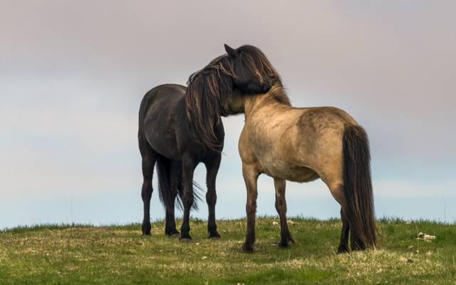 多雨,田野,天空,草,爱,马