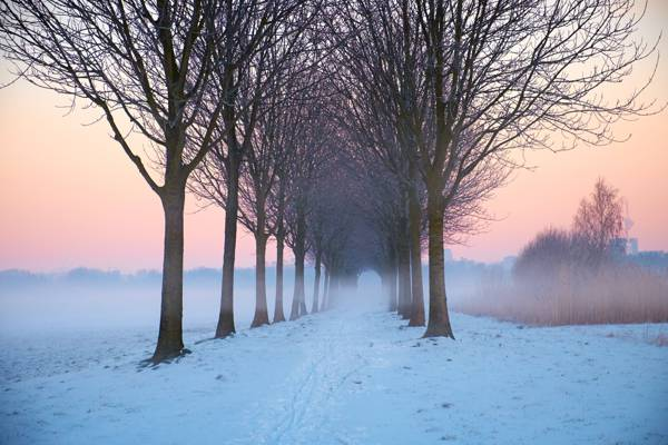 在黄金时段高清壁纸树与雪