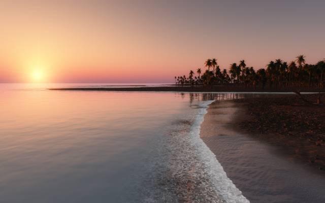 海洋,棕榈树,海岸,热带地区,日落