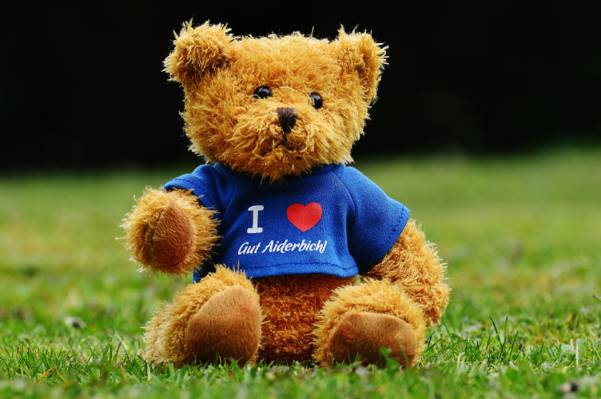 棕色和黑色的泰迪熊在绿草高清壁纸