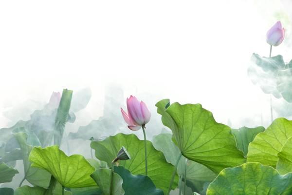 紫色和白色petaled花场高清壁纸