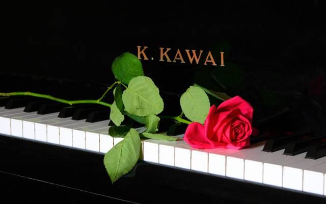 音乐,钢琴,玫瑰