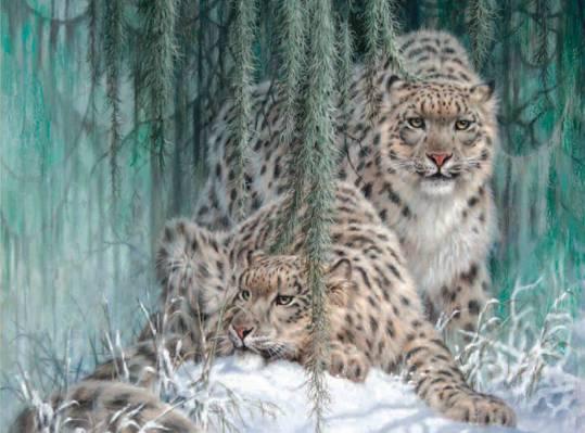 雪,豹,雪豹,冬天,绘画,在月光下的鬼,拉里·范宁,IRBIS,雪豹