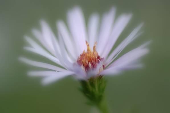 白色和红色的花朵高清壁纸