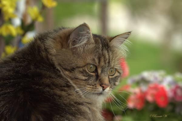 猫,kotofeich,kote,他是一个认真的人,脸上,看
