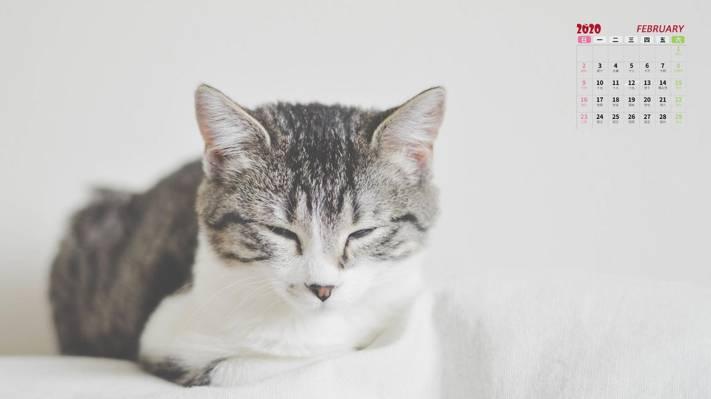 2020年打盹的可爱猫咪2月日历