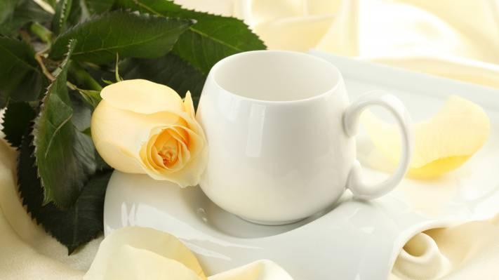 壁纸花,芽,丝绸,杯,丝绸,花,玫瑰