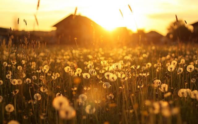 景观,房子,光,蒲公英,日落