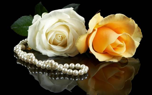 鲜花,背景,白,玫瑰,一对夫妇,珍珠,黑色,黄色