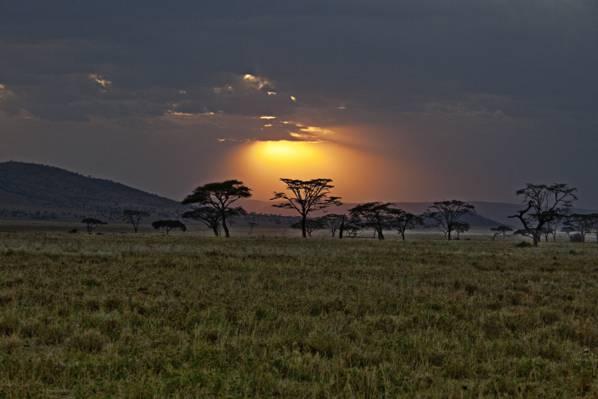 肯尼亚,非洲,萨凡纳,日落