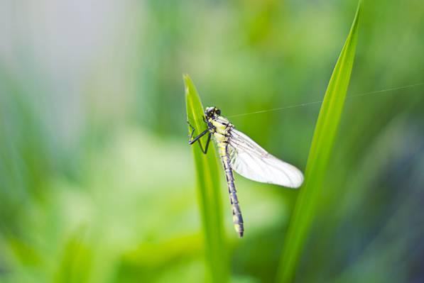 性质,昆虫,蜻蜓,特写高清壁纸