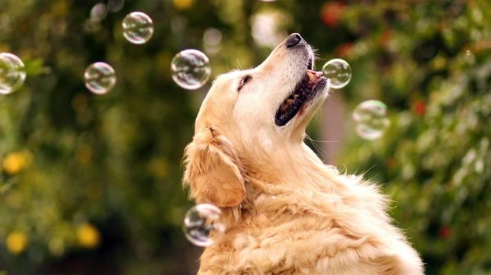 可爱狗狗也拍唯美画报