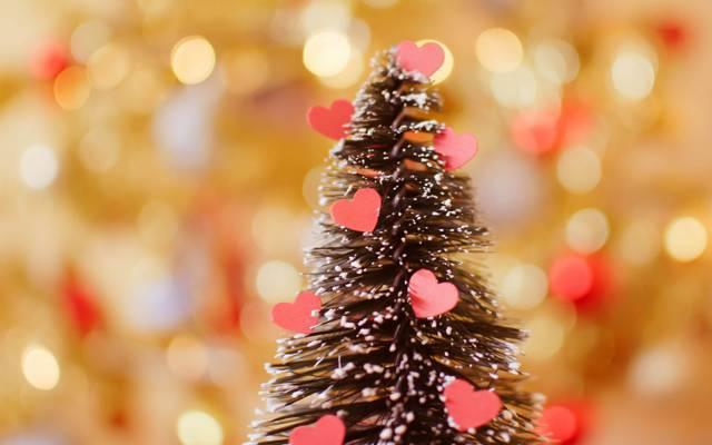 树,假期,心