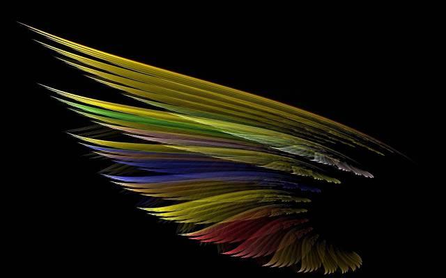 翼,颜色,羽毛,光,阴影,鸟
