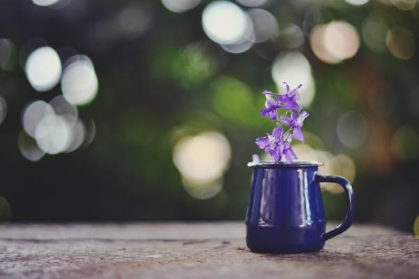 杯子,眩光,花,紫色