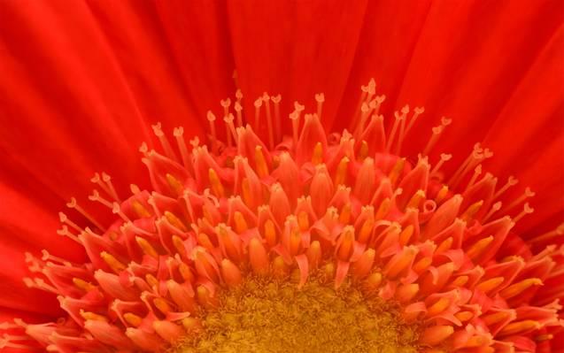 橙色petaled花HD墙纸特写镜头摄影