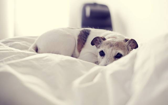 狗,舒适,房子