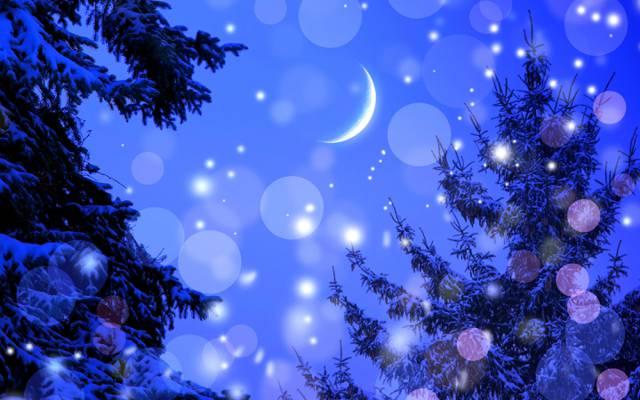 雪,冬天,树,灯,吃,一个月,夜晚,眩光,星星