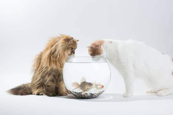 汉娜,黛西,兴趣,本杰明托德,鱼,本托罗德,猫,水族馆