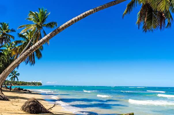 太阳,热带,夏天,棕榈树,沙子,海,沙子,海,海滩,海岸,海滩,海岛,天堂,棕榈...
