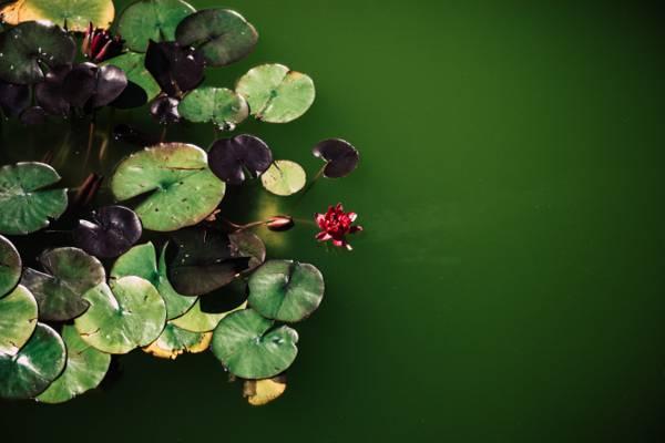 关闭绿色植物高清壁纸的照片