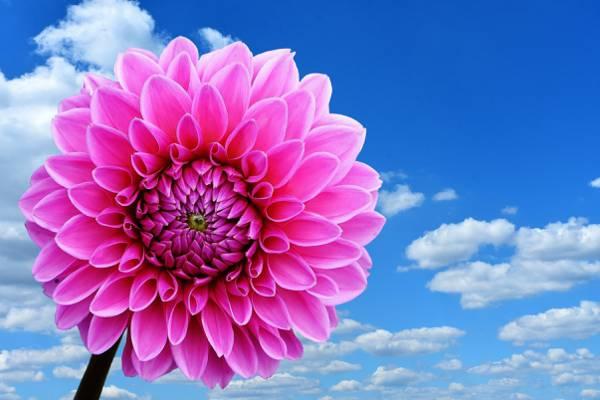 粉红色的花,在白天高清壁纸的多云的天空下