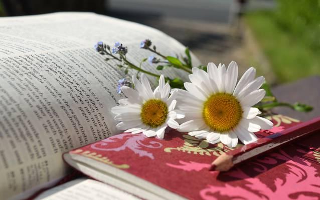 白色雏菊花红色的书高清壁纸