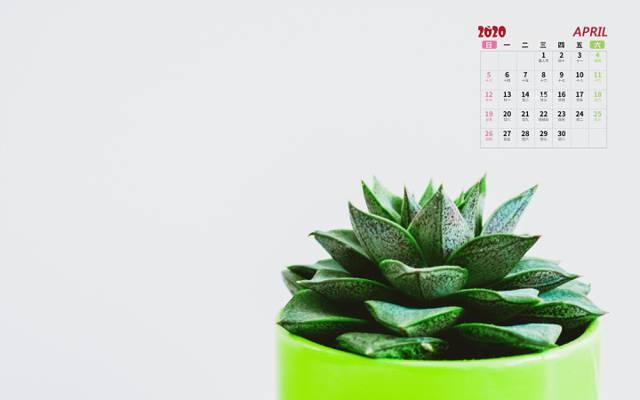 2020年小清新多肉盆栽4月日历
