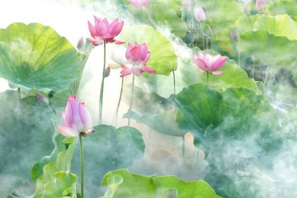 白色和粉红色的花绘画高清壁纸