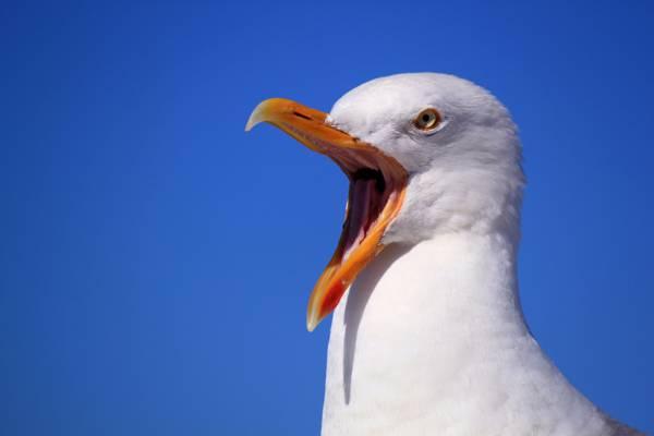 关闭白鸟高清壁纸摄影