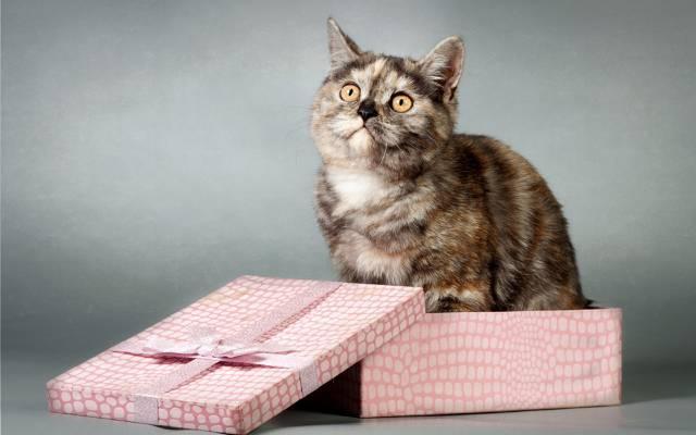 猫,看,框,礼物