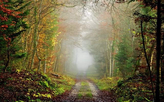 雾,路,秋天,森林