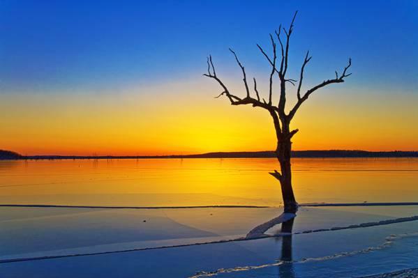 在金黄小时高清壁纸附近的水体附近摄影的光秃秃的树