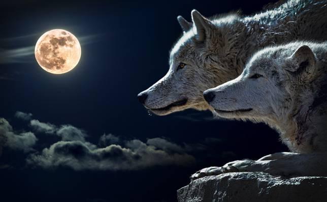 两只狼在满月下看悬崖高清壁纸
