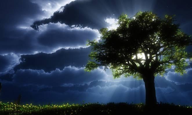 云,艺术,皇冠,太阳光线,树,叶子,黑暗,太阳,草
