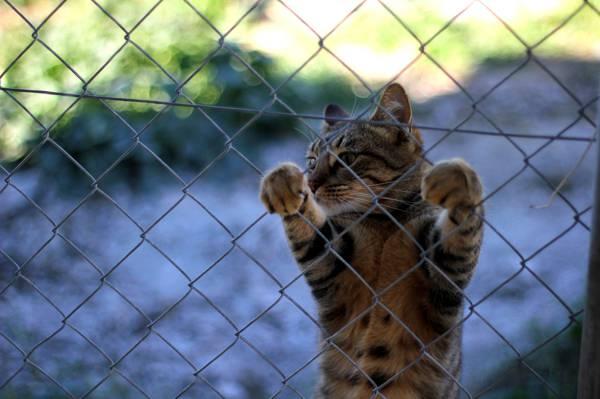 小胡子,篱笆,腿,Koshak,雄猫,猫