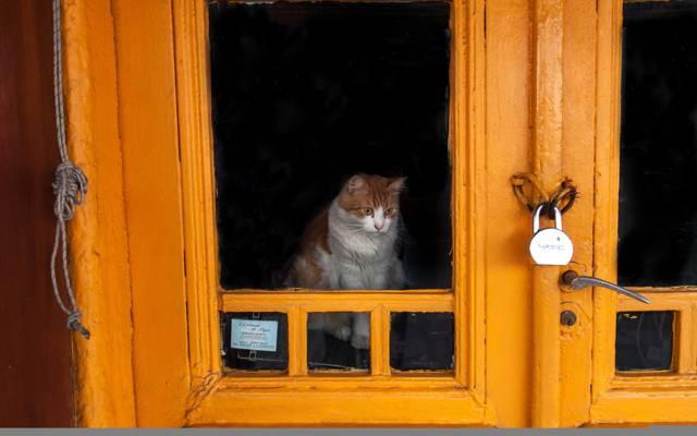 猫,门,城堡