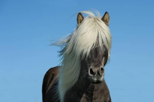 黑色和白色的马高清壁纸