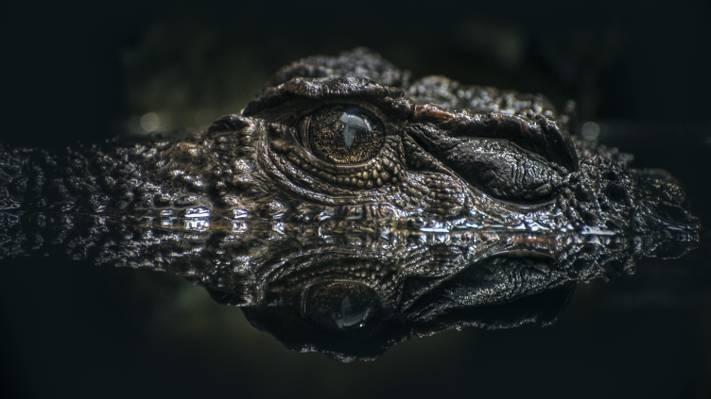 短吻鳄眼对水高清壁纸的散景效果