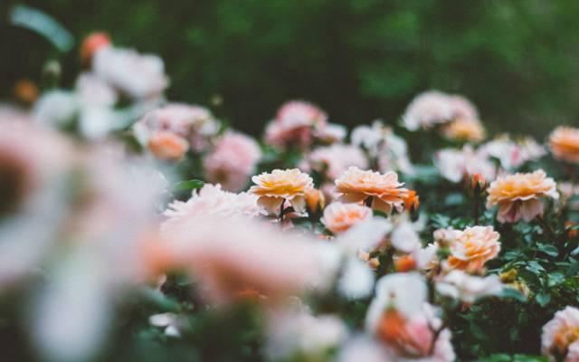 花很多,花瓣